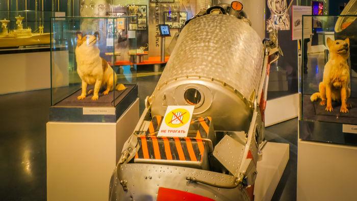 Belka e Strelka foram duas cadelas que tripularam o Sputnik 5 e os primeiros seres vivos a serem trazidos com vida do espaço.*