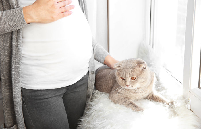 É recomendado que durante a gestação a mulher não faça a limpeza das fezes do gato.