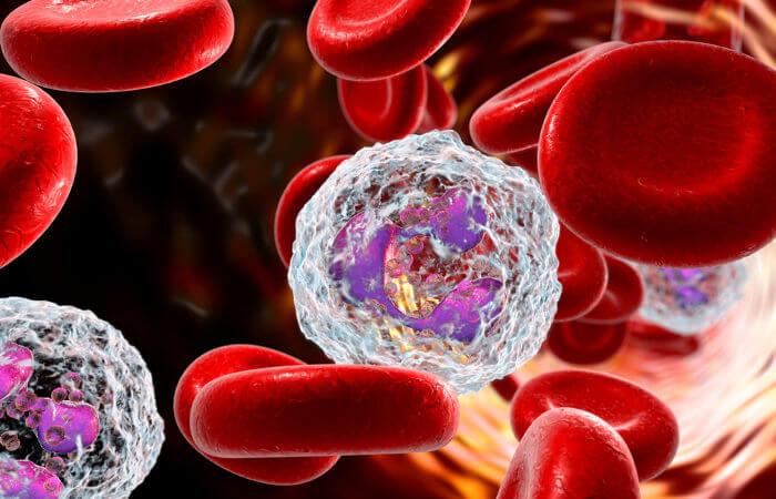 O sangue é um tecido conjuntivo com propriedades especiais.