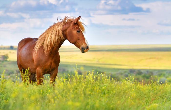 O cavalo é um animal mamífero que apresenta grande importância na história do ser humano.