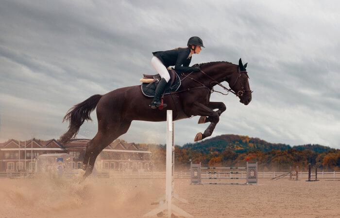 O cavalo é um animal utilizado pelo ser humano de diferentes formas, até mesmo na prática de esportes.