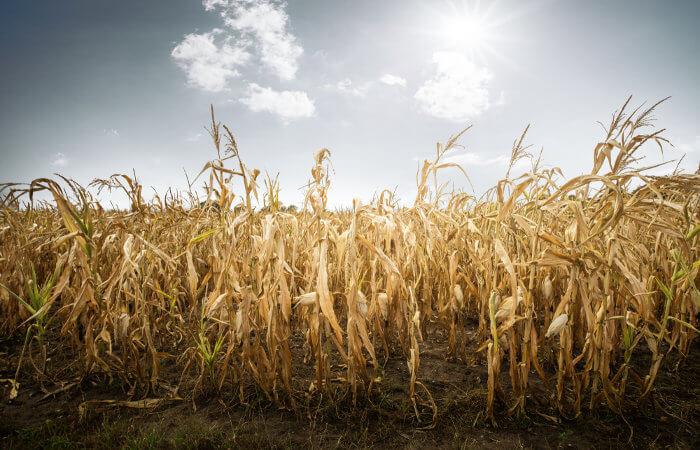Mudanças climáticas poderão levar a problemas de abastecimento.