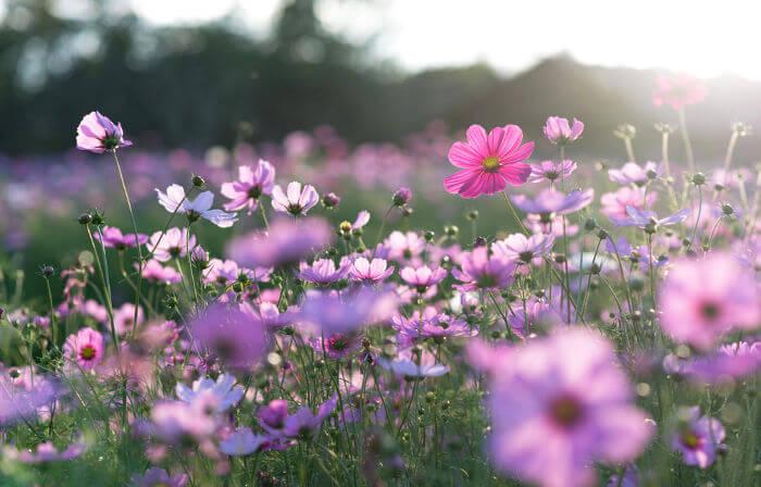 A primavera é a estação do ano conhecida como estação das flores.