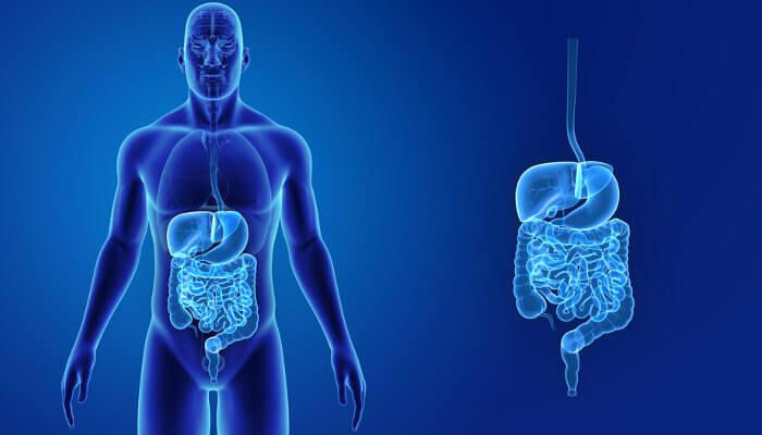 O sistema digestório garante que os nutrientes dos alimentos sejam absorvidos.
