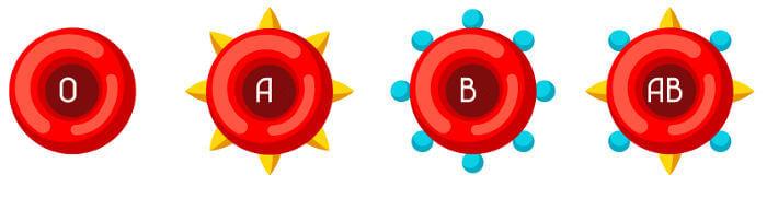 O sangue humano pode ser classificado em quatro tipos diferentes.