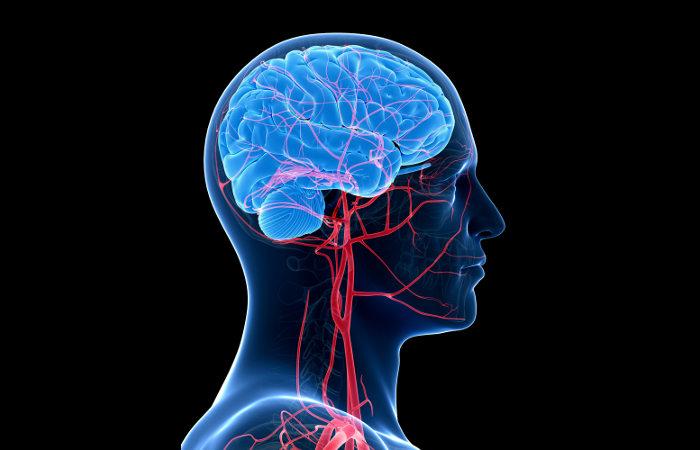 As artérias garantem que todo o corpo receba sangue rico em oxigênio.