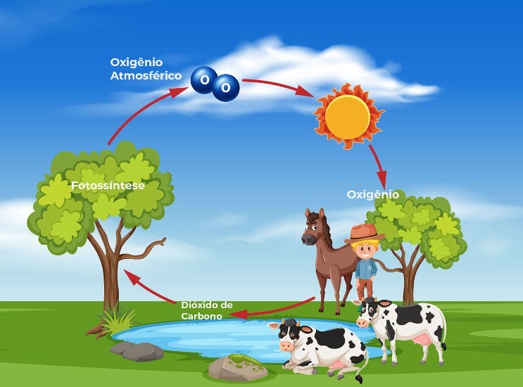 A fotossíntese é responsável pela produção de oxigênio, essencial para a vida da maioria dos organismos.
