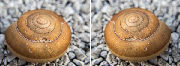 A concha da imagem é enantiomorfa, não é possível sobrepô-la à sua imagem.