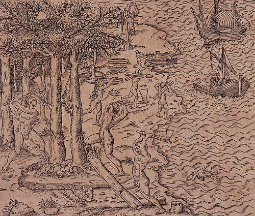 Derrubada do pau-brasil, ilustração de André Thevet, 1575.