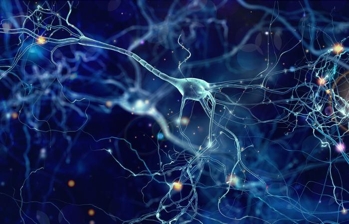 Os neurônios são células responsáveis pela transmissão dos impulsos nervosos.