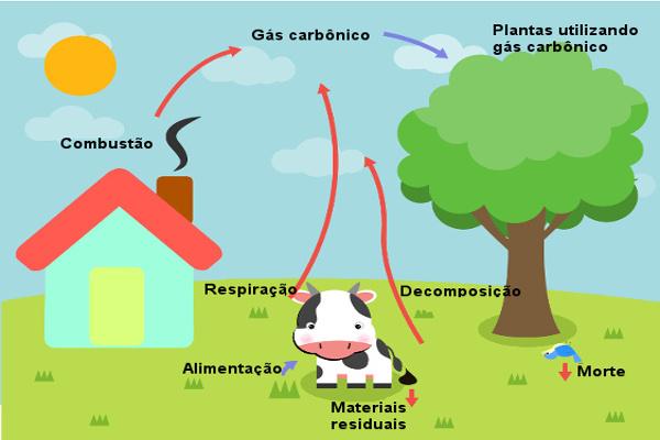 O ciclo do carbono envolve duas etapas: a geológica e a biológica.