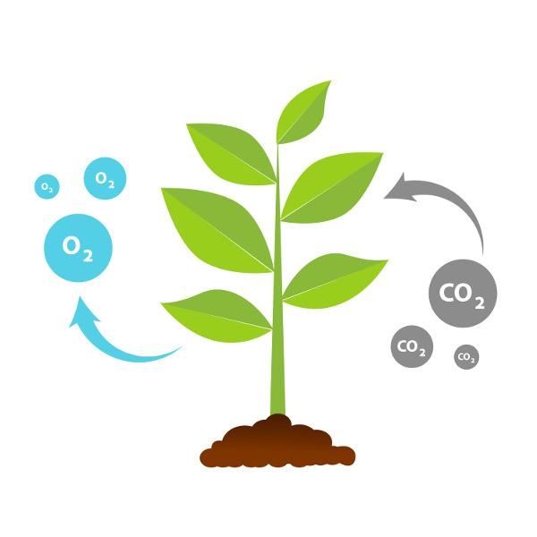 A fotossíntese é um processo em que o gás carbônico é retirado do meio.