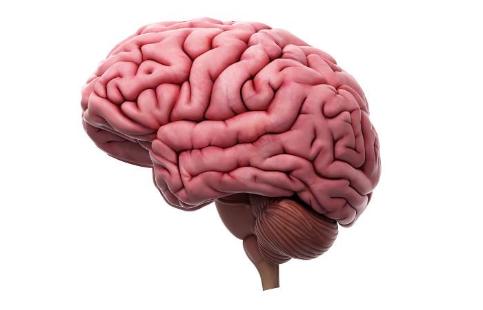 O cérebro relaciona-se com a memória e com a aprendizagem.