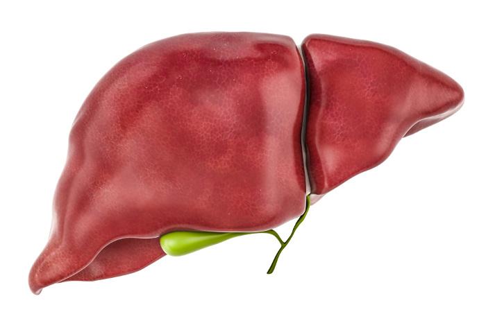 O fígado é responsável por produzir a bile.