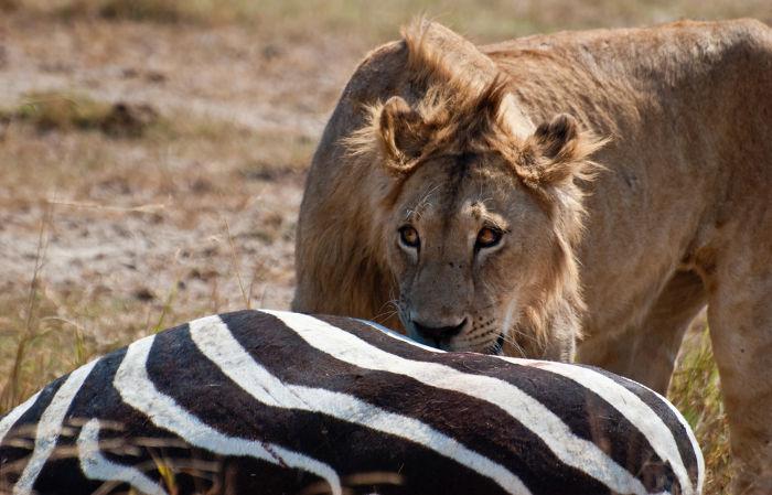 Quando um animal mata e alimenta-se do outro, ocorre uma relação interespecífica desarmônica.