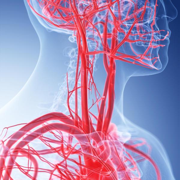 O sangue corre no interior dos vasos sanguíneos.