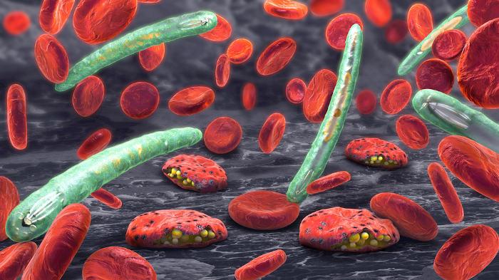 A malária é um exemplo de febre hemorrágica causada por um protozoário.