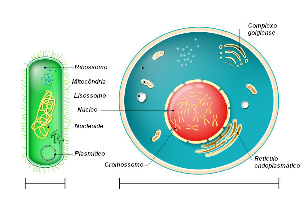 Observe as principais diferenças entre as células procarióticas e eucarióticas.