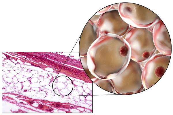 No tecido adiposo, encontramos células especializadas denominadas adipócitos.