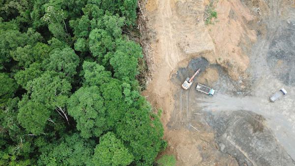 O desmatamento causa uma série de prejuízos ambientais, como alterações nos regimes de chuva.