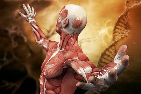 A fisiologia é uma área da biologia responsável por estudar o funcionamento do corpo dos seres vivos.