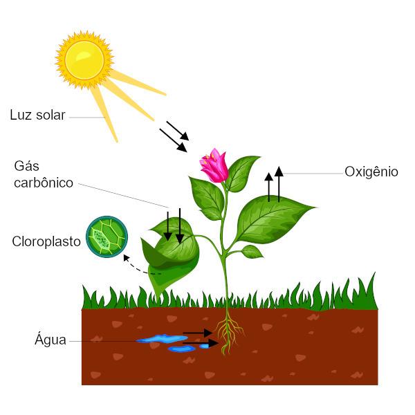 A fotossíntese é um dos temas trabalhados na fisiologia vegetal.