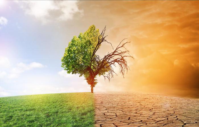A ação do homem tem provocado consequências drásticas no meio ambiente. É preciso agir rapidamente para preservarmos o planeta.