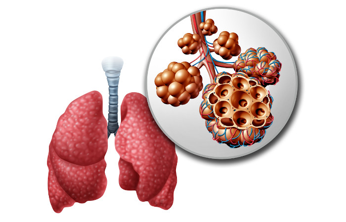 A respiração pulmonar ocorre em todos os vertebrados terrestres. Na figura, temos um esquema do pulmão humano e detalhe dos seus alvéolos.