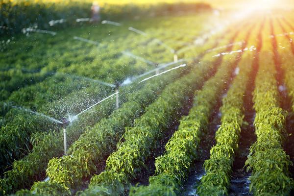 Sistema de irrigação de plantas na agricultura moderna.
