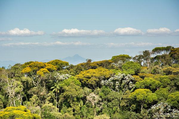 Área de Mata Atlântica em Minas Gerais.