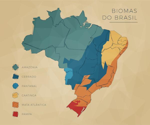Localizada no litoral brasileiro, a Mata Atlântica foi o primeiro bioma desmatado do Brasil.