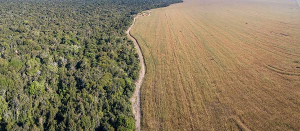 Vista aérea da devastação no Parque Ambiental do Xingu – Amazônia.