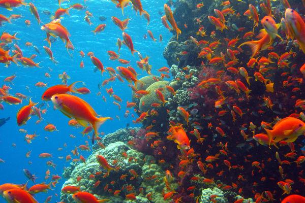 A vida na Terra surgiu primeiro no oceano.