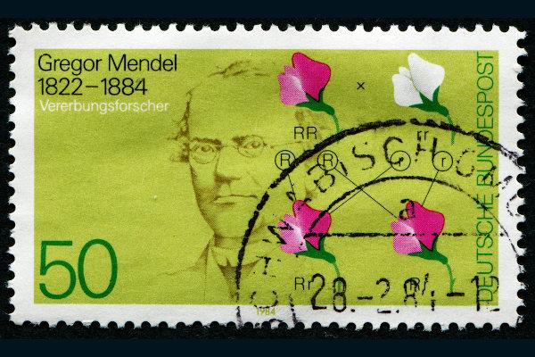 Mendel morou em um monastério, onde desenvolveu seu famoso trabalho com ervilhas.