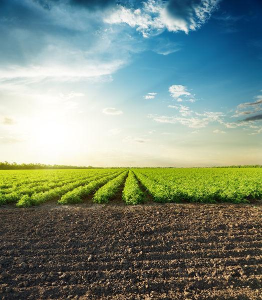 Preparo do solo para o cultivo agrícola.
