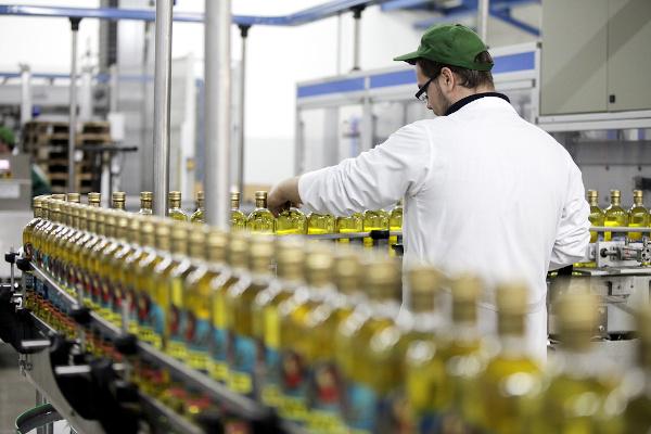 Produção industrial de azeite na Itália