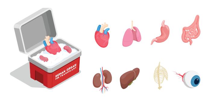 Diferentemente do que muitos pensam, vários órgãos podem ser doados, incluindo pele e ossos.