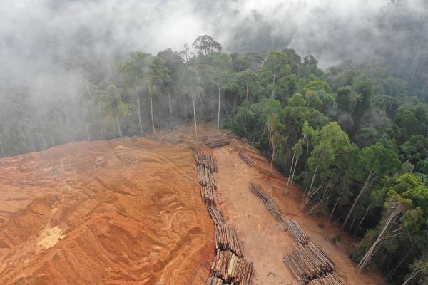 Há uma relação bem próxima entre desmatamento e queimada na Amazônia.