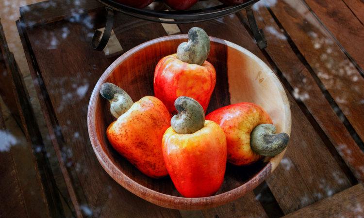 A parte suculenta do caju não se trata de um fruto verdadeiro.
