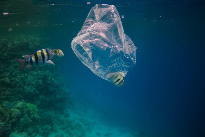 A poluição no oceano prejudica diversas espécies marinhas.