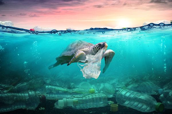 A poluição ameaça a fauna e a flora de uma região, podendo provocar até mesmo a extinção de espécies.