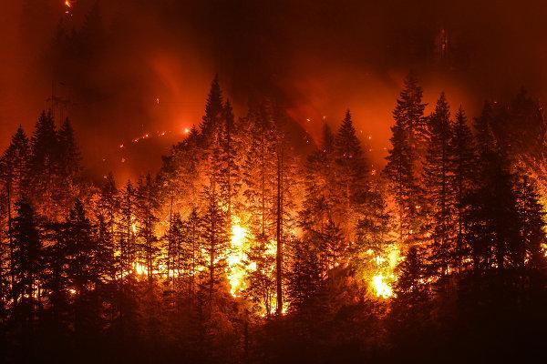 Queimadas florestais prejudicam não apenas o local queimado.