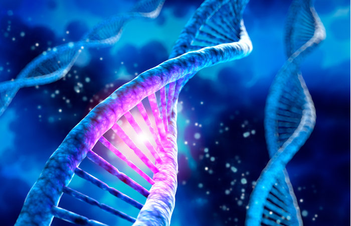 A variabilidade genética diz respeito à variedade de alelos em uma espécie.