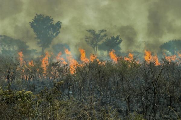 As queimadas são a técnica de remoção da vegetação mais utilizada pelos produtores agropecuários, a fim de limpar-se a área para a produção.