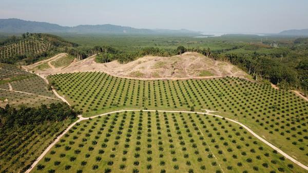 A produção agrícola é o principal motor do desmatamento nos países subdesenvolvidos e emergentes.