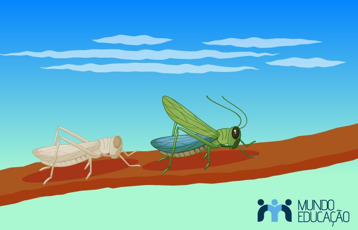 O exoesqueleto dos artrópodes protege-os, mas deve ser trocado para garantir o desenvolvimento desses animais.
