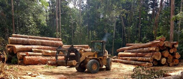 A utilização da madeira como matéria-prima para a produção de diferentes produtos gera uma grande perda vegetacional para as florestas.