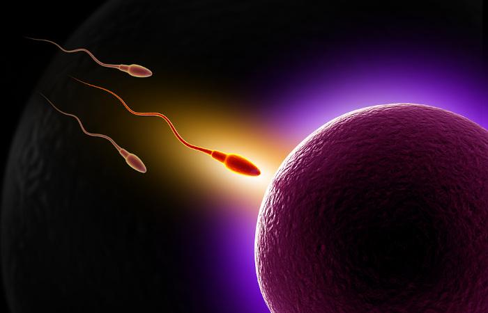 Na reprodução sexuada, observa-se a fusão dos gametas.