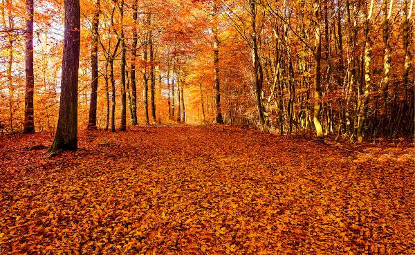 Queda das folhas no outono do Hemisfério Norte