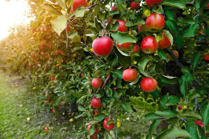 O outono é conhecido como a estação das frutas.